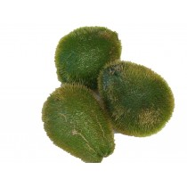 MEXICAN CHAYOTE WITH THORN PER LB